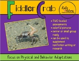 Animal Adaptations: Fiddler Crab with Leveled Assessments