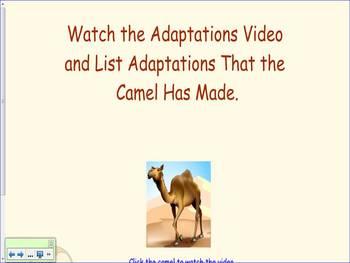 Animal Adaptations First Grade