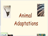 Animal Adaptations First Grade