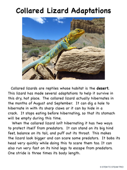 Animal  Adaptations: Five Informational Reading Passages