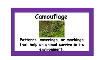 Animal Adaptations, Food chains, and Habitats Vocabulary Cards for Word Wall