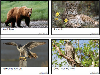 Animal Adaptations Game (Tag) Mimicry / Camouflage / Food Chain / Consumers etc!