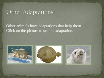 Animal Adaptations Interactive Powerpoint