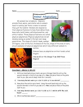 Animal Adaptations Lesson Plan + Game
