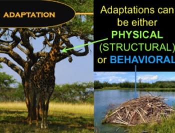 Animal Adaptations - Lesson Plan, Presentation, Great Video Song/Rap
