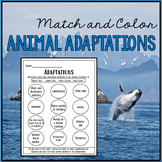 Animal Adaptations - Match and Color - Freebie