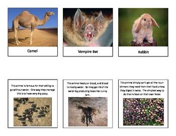 Animal Adaptations Matching