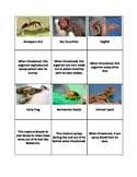 Animal Adaptations Matching - Defense Mechanisms