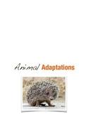 Animal Adaptations Minibook