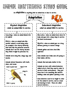 Animal Adaptations BUNDLE!