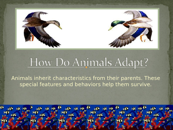 Animal Adaptations Power Point Lesson and Interactive Quiz