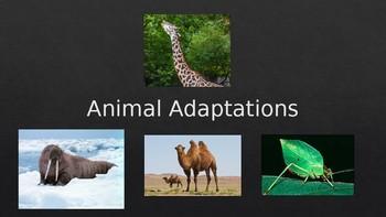 Animal Adaptations PowerPoint