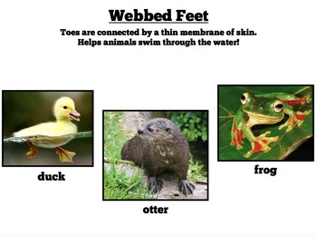 Animal Adaptations PowerPoint & Guided Notes