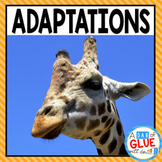 Animal Adaptations (PowerPoint, Posters, Worksheets, and More)