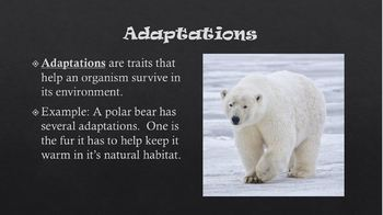 Animal Adaptations PowerPoint and Reading Passage w/ Questions