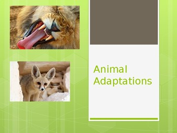 Animal Adaptations Presentation