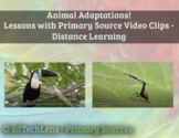 Animal Adaptations Primary Source Video Clip Lessons