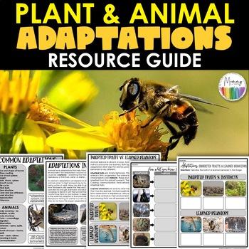 Animal Adaptations/Habitats Activity & Project (Integrates