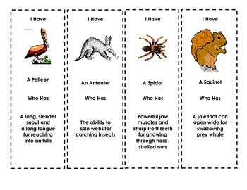 Animal Adaptations Review GAME