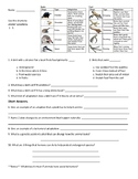 Animal Adaptations: Review and Quiz