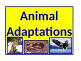 Animal Adaptations (Revised)