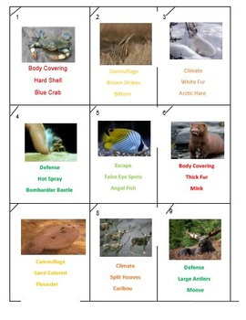 Animal Adaptations Rummy