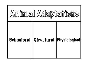 Animal Adaptations Science Interactive Foldable