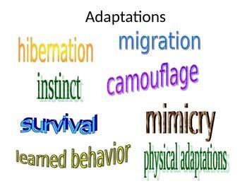 Animal Adaptations Science Interactive Notebook (VA 3.4)
