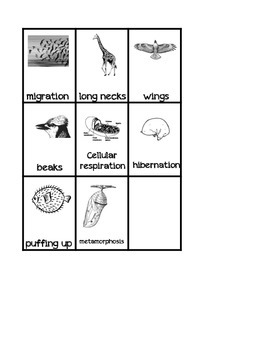 Animal Adaptations Science Sorting Activity