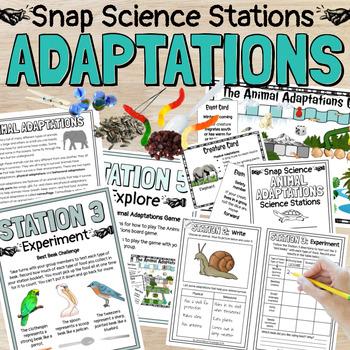Animal Adaptations Science Stations