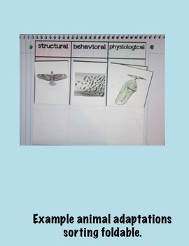 Animal Adaptations Science Interactive Foldables and Activities Super Bundle