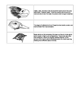 Animal Adaptations Task