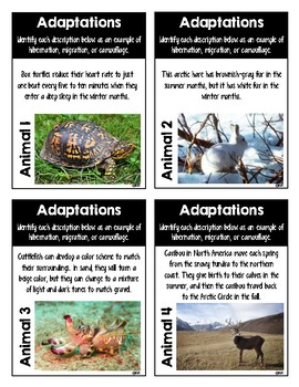 Animal Adaptations Task Cards {Hibernation, Migration, Camouflage}
