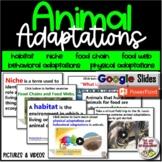 Science Animal Adaptations Unit Slide Presentation - Upper Elementary