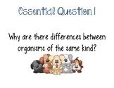 Animal Adaptations Vocabulary