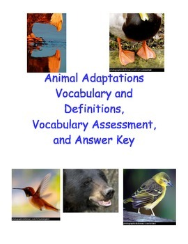 Animal Adaptations Vocabulary, Assessment, and Answer Key