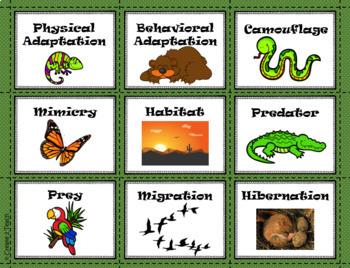 Animal Adaptation Vocabulary Games