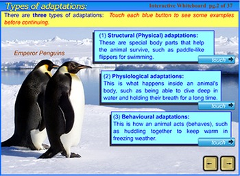 Animal Adaptations - a SmartBoard and Interactive Whiteboard lesson
