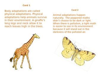 Animal Adaptations and Behaviors Scavenger Hunt