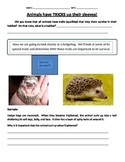 Animal Adaptations and Traits
