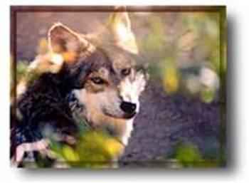 Animal Adaptations and their Biomes