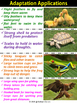 Animal Adaptations colorful Posters for Classroom