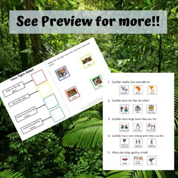 Animal Adaptations for Special Education : Gorillas and Tigers