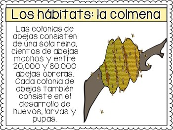 Animal Adaptations in Spanish