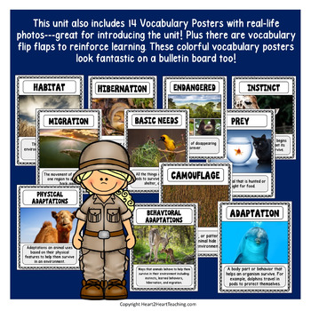 Animal Adaptations with Dian Fossey and Jane Goodall  {UK VERSION}