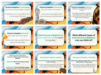 Animal Adaptions PowerPoint