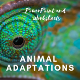 Animal Adaptions PowerPoint Presentation and Worksheet