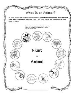animal antics worksheets by just jan teachers pay teachers. Black Bedroom Furniture Sets. Home Design Ideas