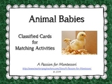Animal Babies, 9 animals and their babies three part cards