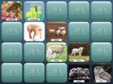 Animal Babies Memory Games